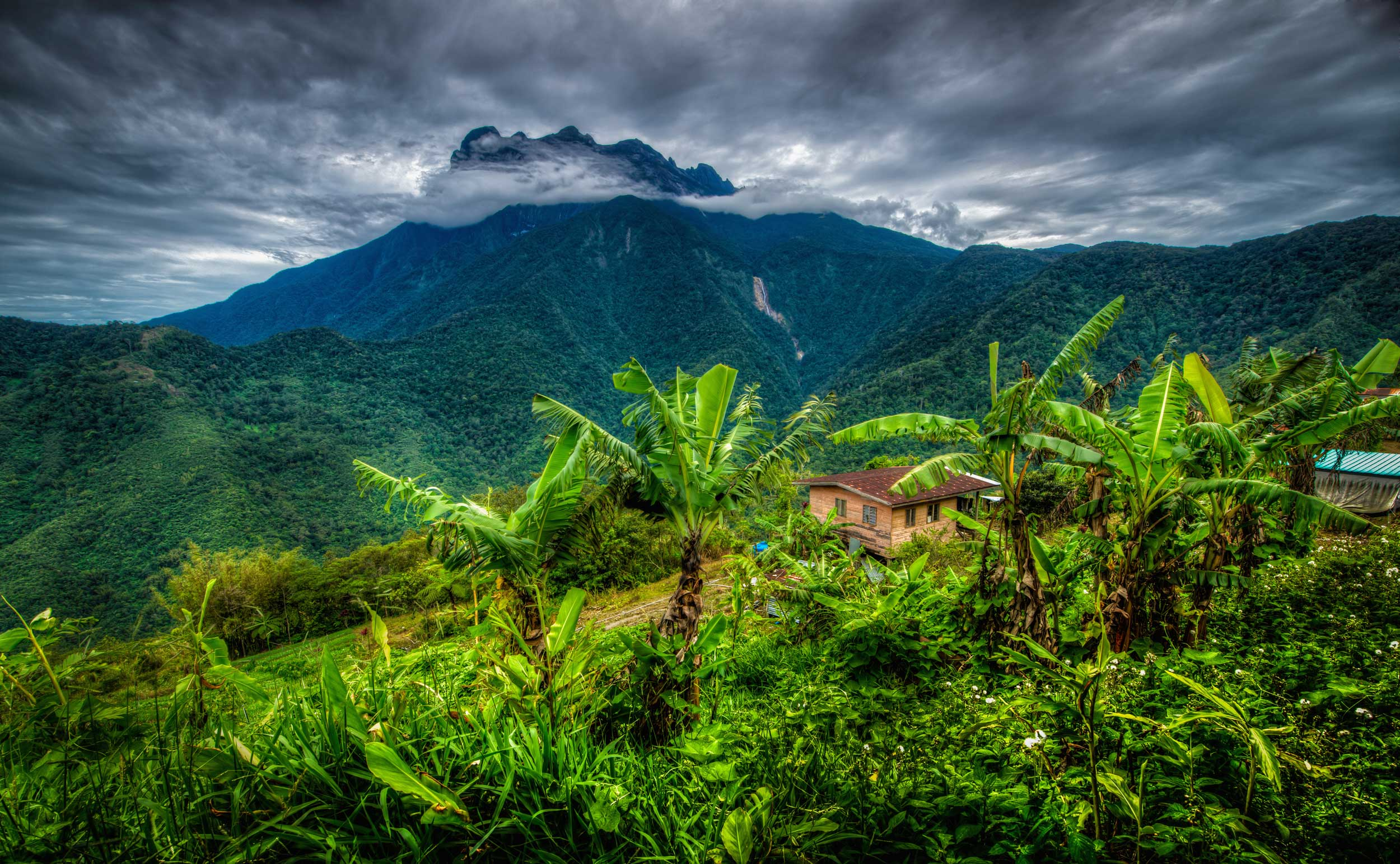 View down a mountainside with banana palms and a house with a brooding, looming Mt Kinabalu in the distant, cloudy sky, Sabah