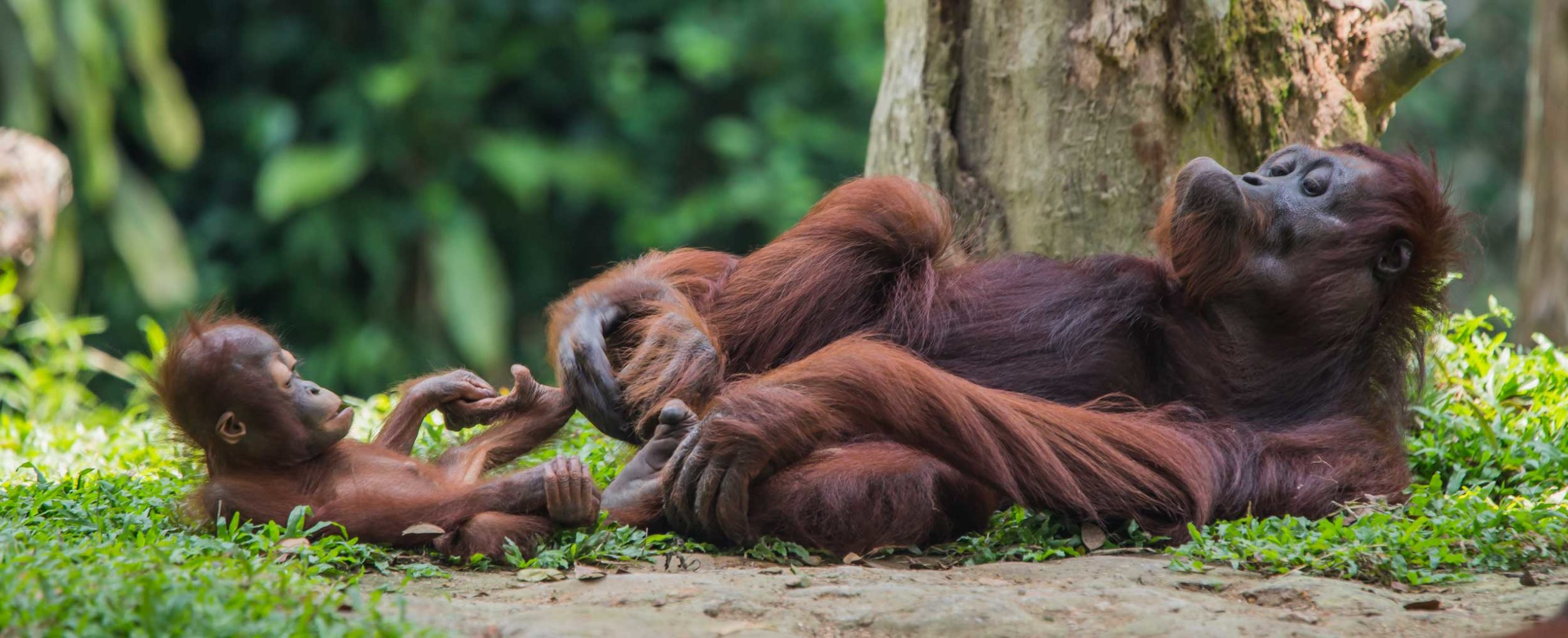 Exploring the Wilds of Malaysian Borneo