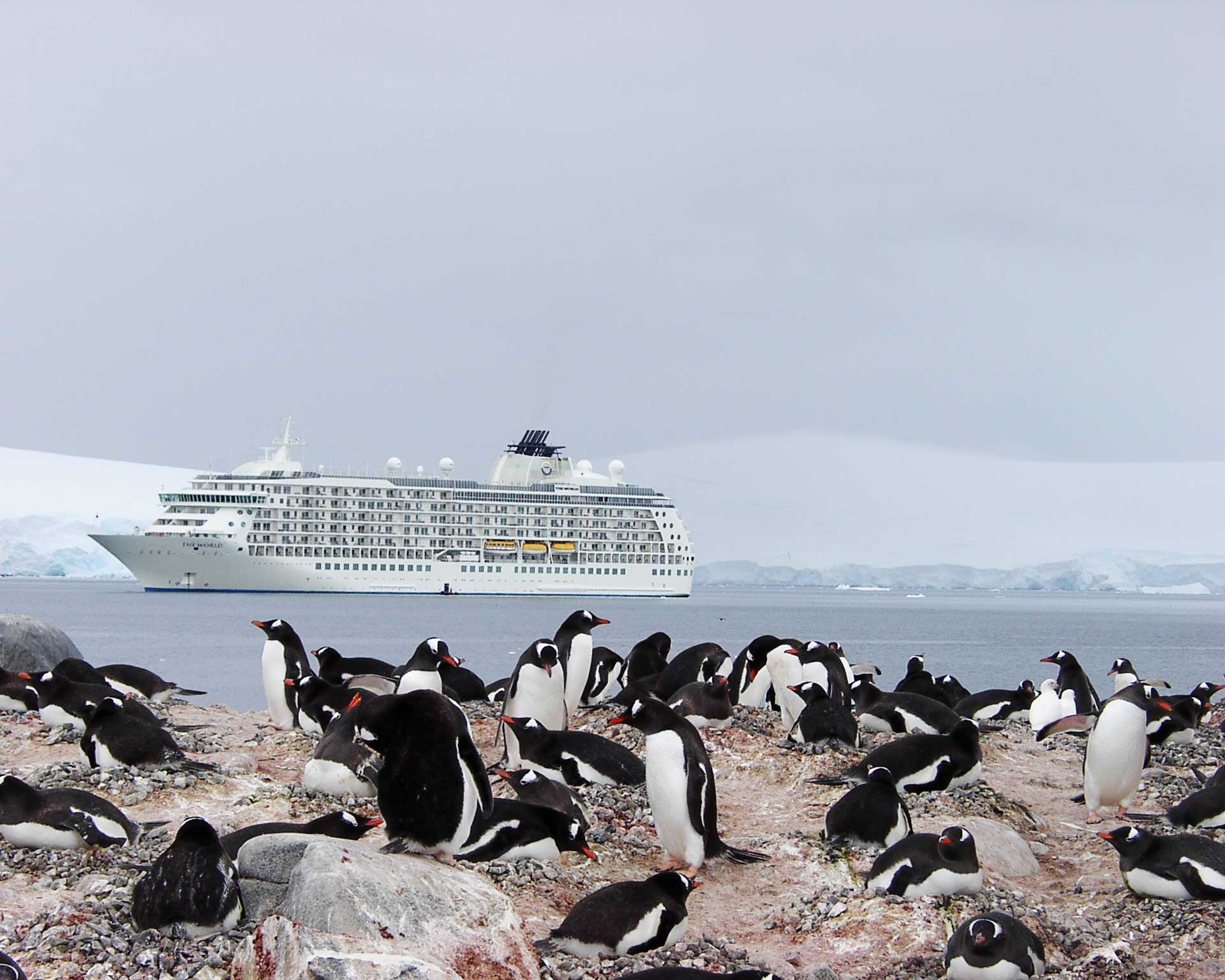 A flock of penguins in the foreground with a large passenger liner in the water behind them