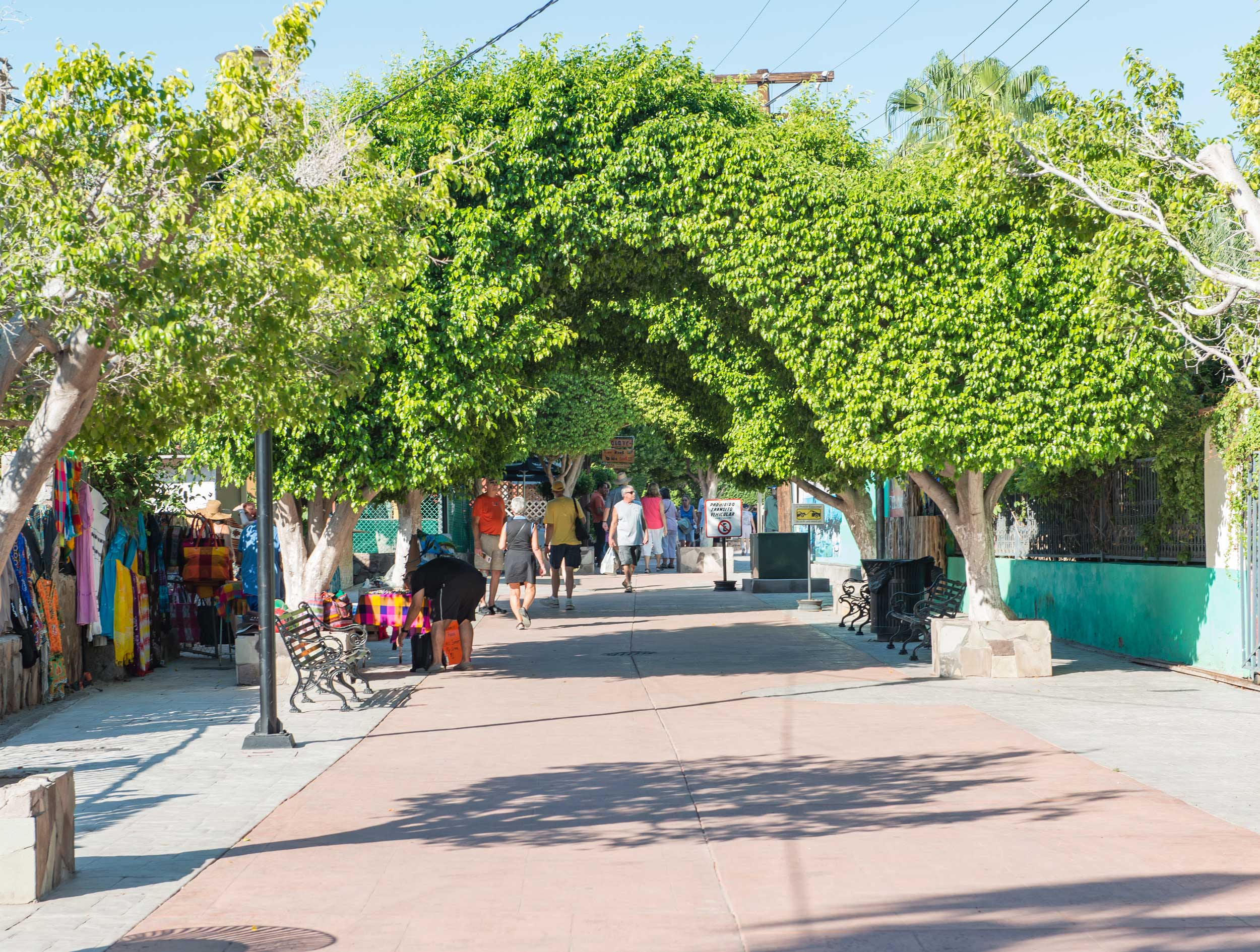 Paved alleyway under a green, leafy tunnel with stalls lining the sides