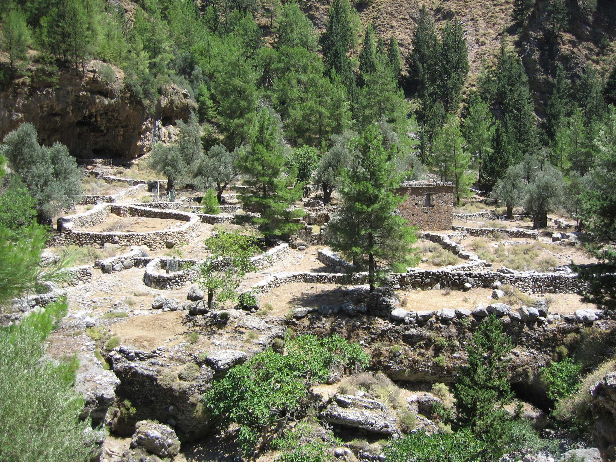 Building and wall ruins in the Samaria Gorge with pine trees growing amongst them, Crete