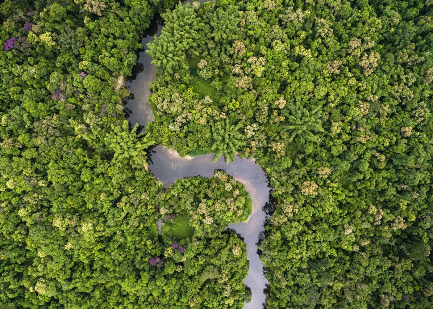 A Taste of the Amazon