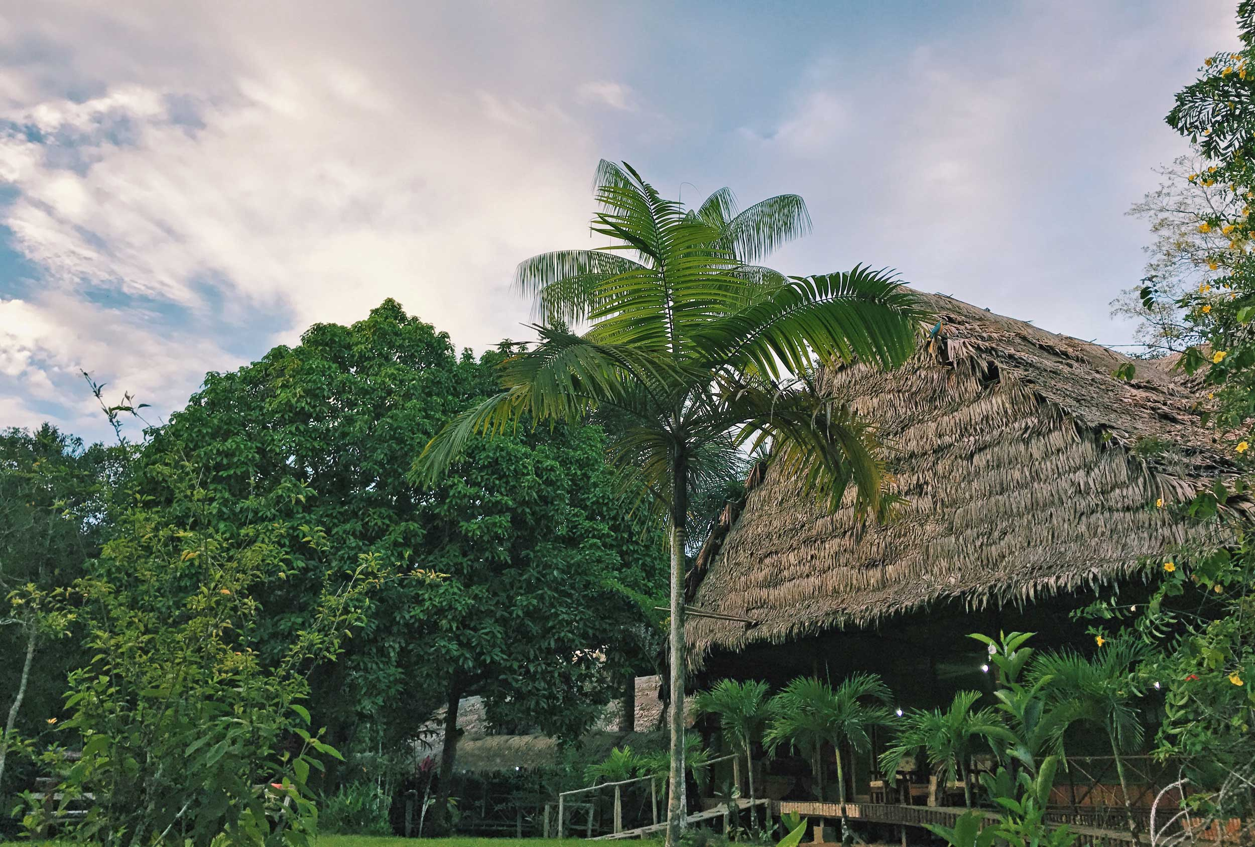 A thatched roof building in the jungle, Peru