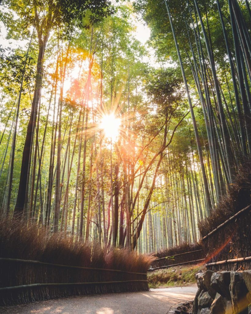 A dense bamboo forest on the western side of Kyoto, known as Arashiyama, is the perfect place for admiring the huge, tall bamboos. When a gentle breeze passes by, the bamboos move all together in synchrony and sound like the forest is speaking.