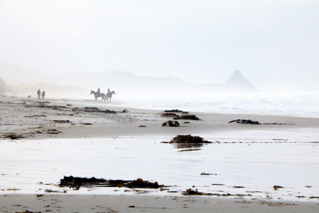Horse riders emerging from the fog on Blackhead Beach, Dunedin.