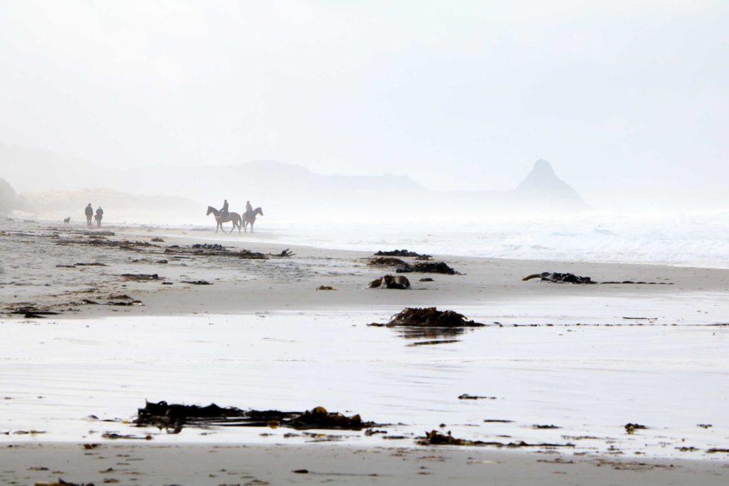 Horse riders emerging from the fog on Blackhead Beach, Dunedin.