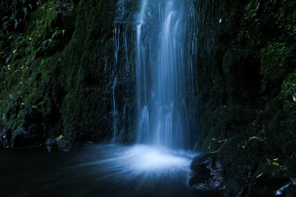 The serene cascade of Nicols Falls, a classic horsetail waterfall situated within the Leith Valley Scenic Reserve in Dunedin.