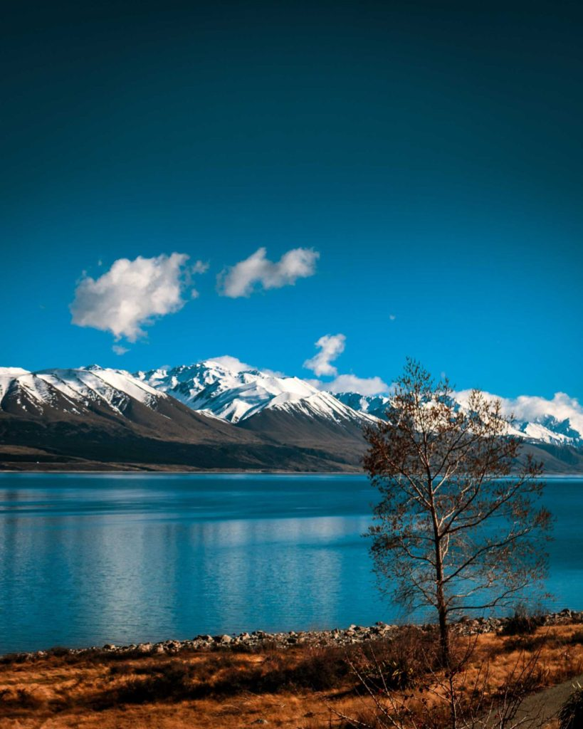 Lake Pukaki borders the road to Mt. Cook, a popular drive for tourists. The snow-capped mountains, blue lake, and brown grass provide a captivating contrast, Mackenzie Basin, South Canterbury.