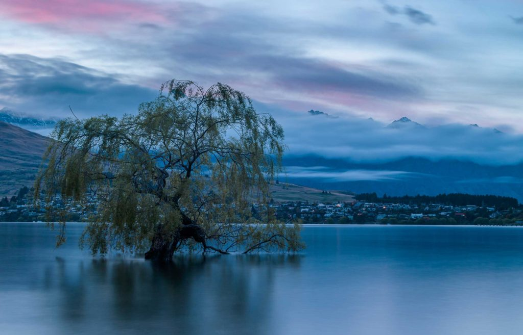 A weeping willow grows in the icy water of Lake Wakatipu, Queenstown, central Otago.