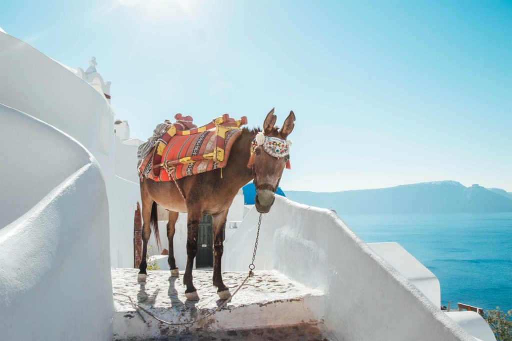 An unexpected visitor poses for the camera in Santorini, Greece.