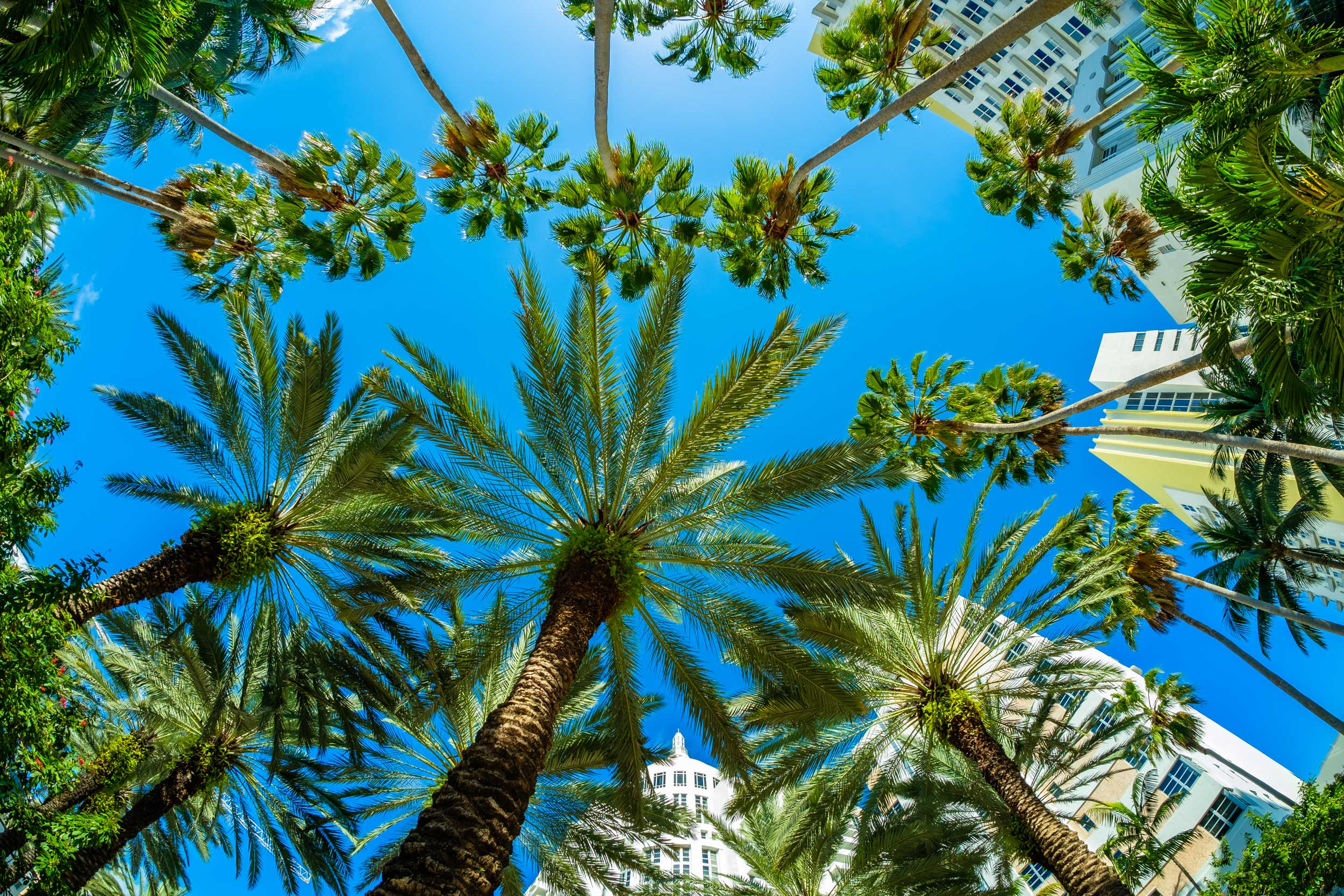 Looking up into palm tree- and skyscraper-tops, Miami, USA