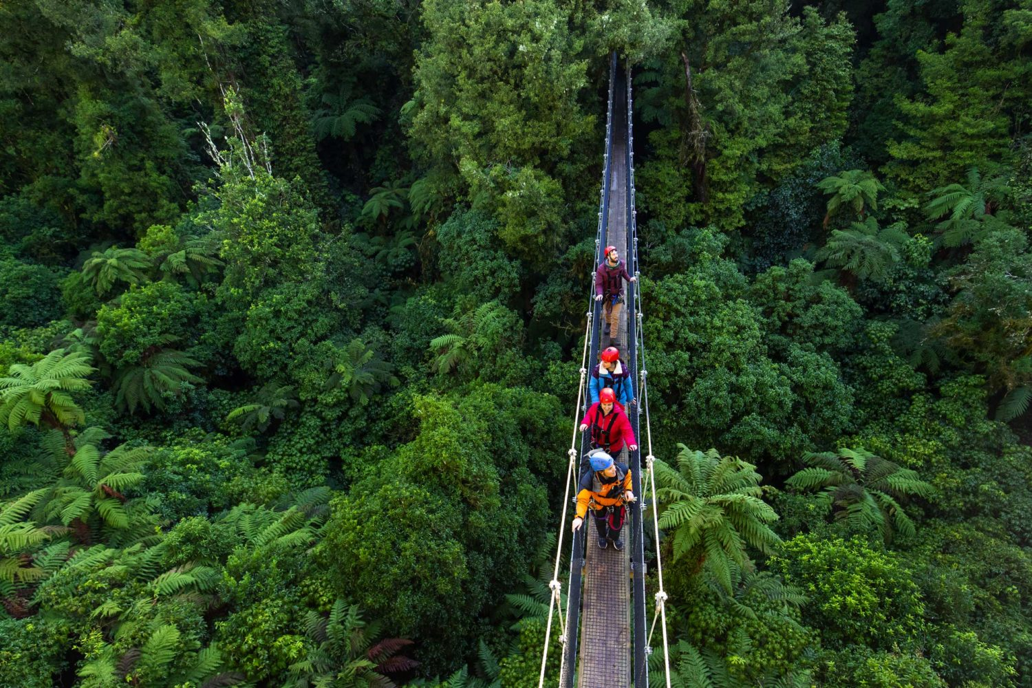 Through the Treetops – The Ultimate Canopy Tour