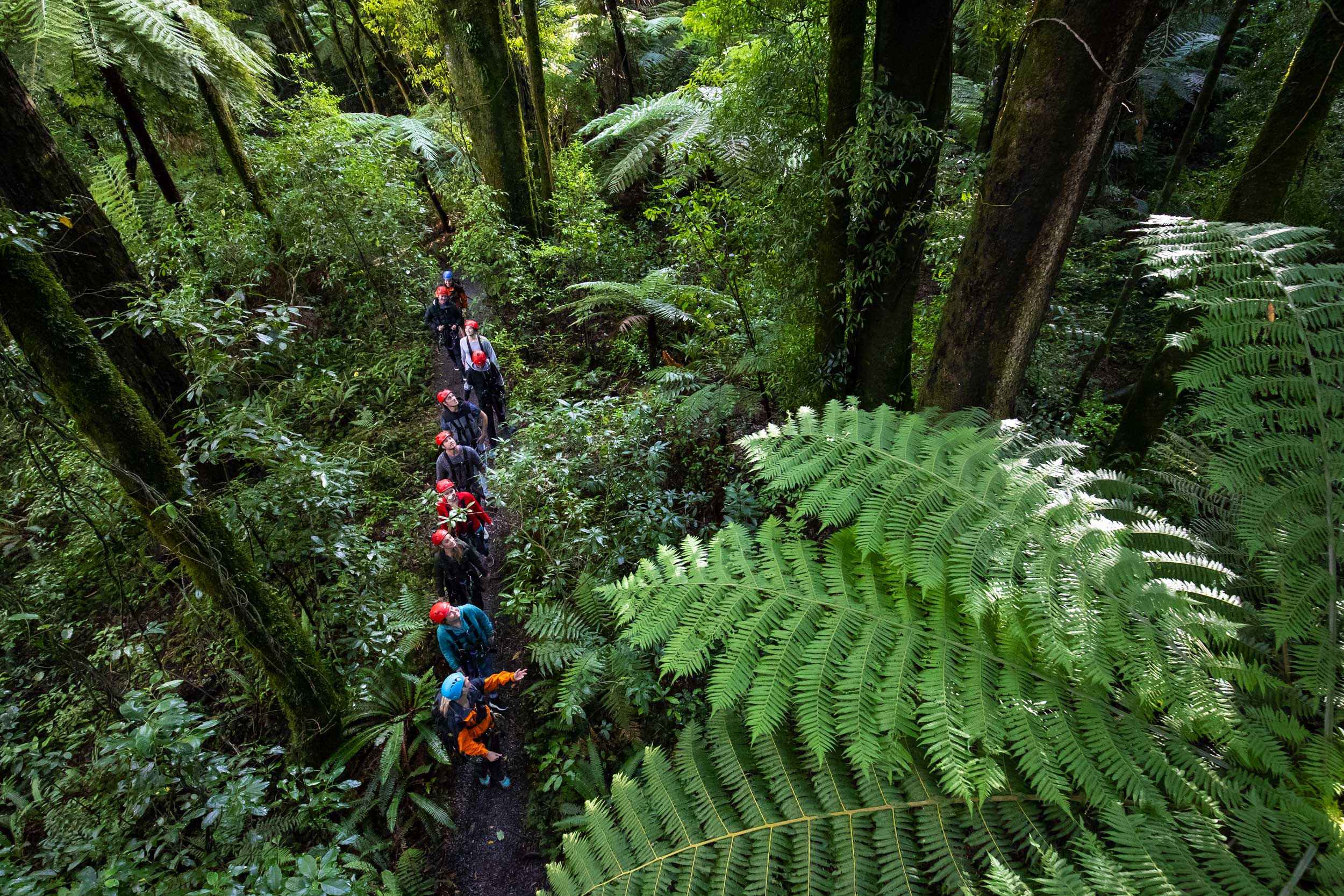 Group of people walking single file through native forest, Rotorua, New Zealand