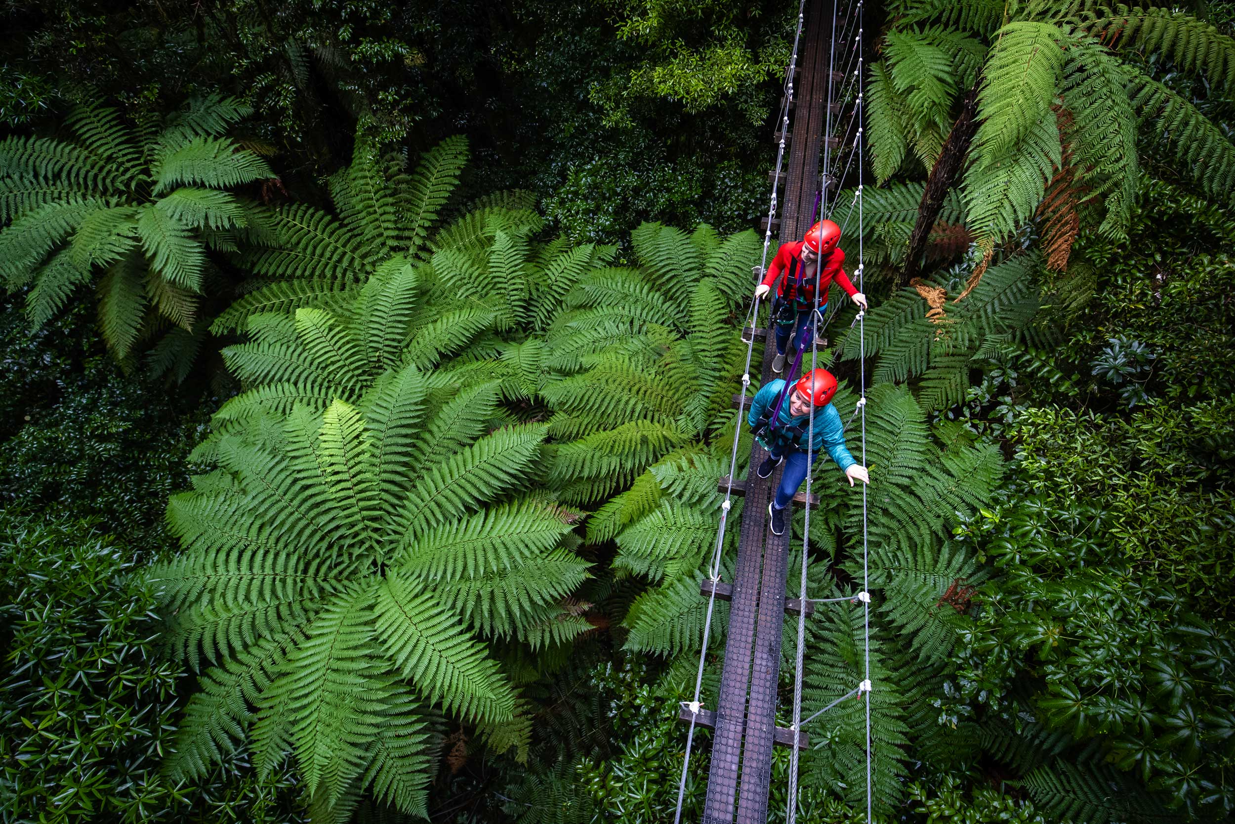 Two women on a swing bridge above native New Zealand fern