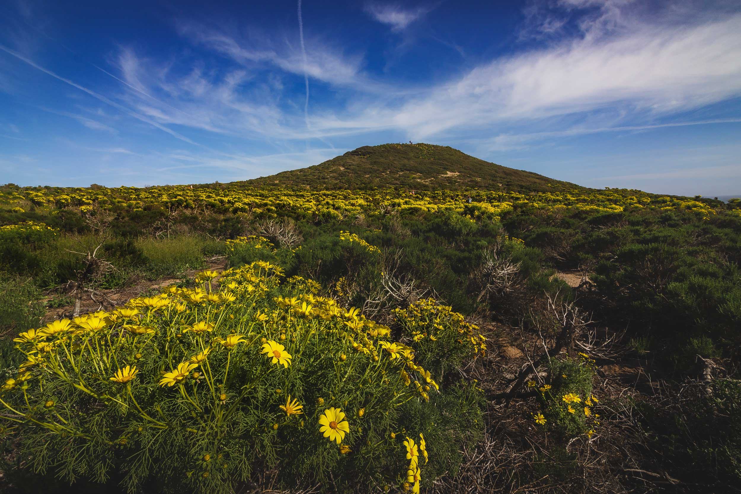 Wildflowers stretching into the distance up to a mountain in the distance, Malibu