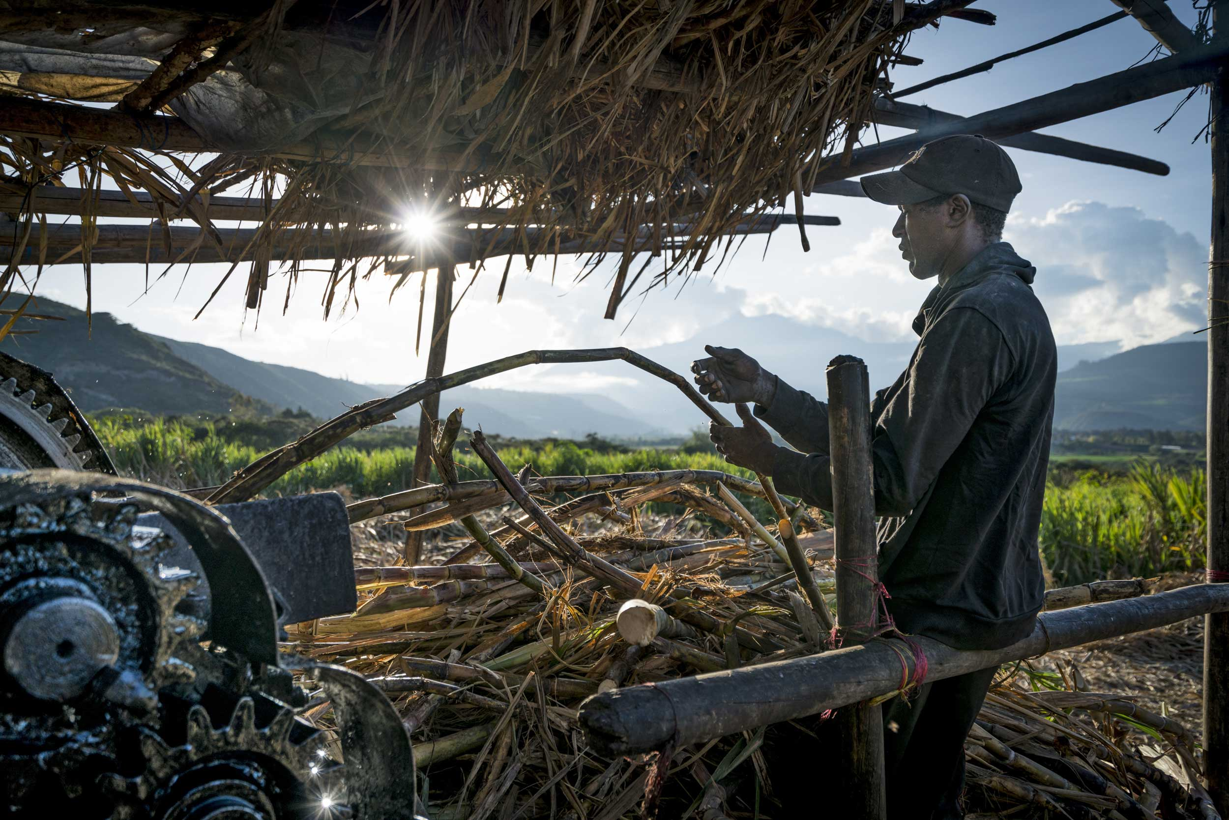 Man pushing sugar cane into a machine, Ecuador