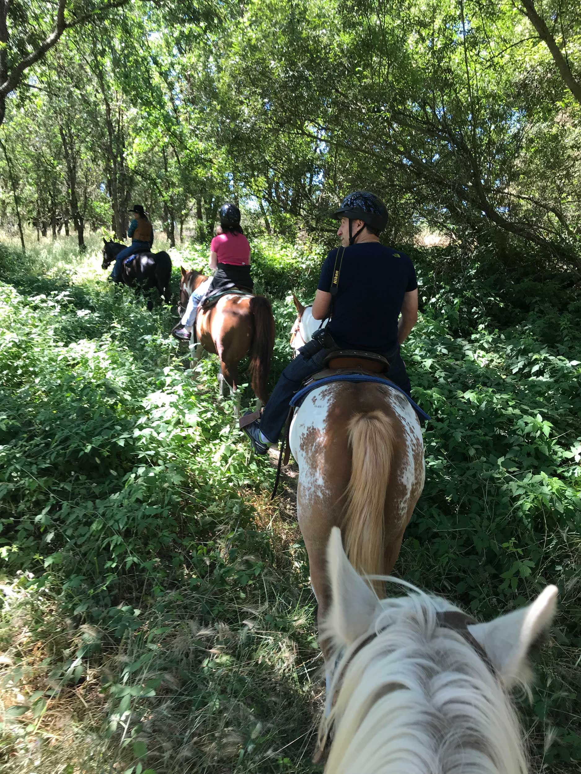 Riding horses single-file through the woods